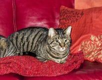 Cat at the sofa Stock Image