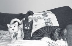 A cat on the sofa near two fabric cats Stock Images