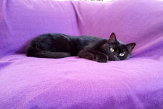 Cat In Sofa negra Fotos de archivo