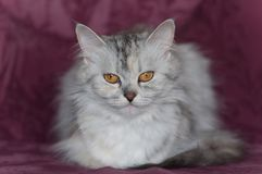 Cat on sofa in red background stock photo