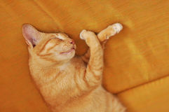 Cat Sofa Sleep Tiger Stock Photos