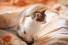 Cat on sofa Royalty Free Stock Images