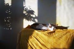 Cat on sofa Royalty Free Stock Image