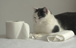 Cat and soft paper. Royalty Free Stock Image