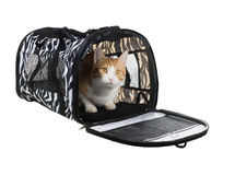 Cat in soft-sided carrier on white background Royalty Free Stock Photo