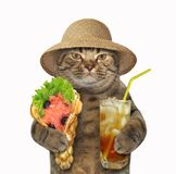 Cat with soft waffles and tea stock images