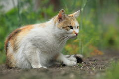 Cat on soil Royalty Free Stock Images