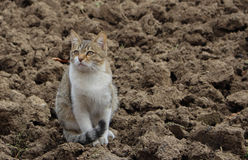 Cat on the soil Royalty Free Stock Image