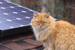 Cat and Solar Panel. Cat in front of Solar Panel Royalty Free Stock Photos