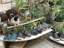 A cat and some shoe flower pots. A row of shoes being used for plants Stock Image