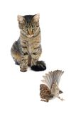 Cat with a sparrow Royalty Free Stock Photography