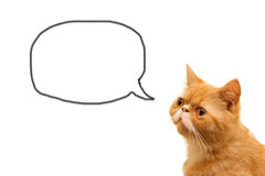 Cat and speech. Pet message, cat with speech on white Stock Images