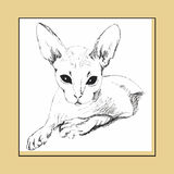 Cat Sphinx figure drawing Royalty Free Stock Photos