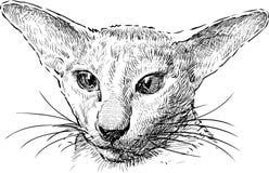 Cat sphinx portrait Stock Photography