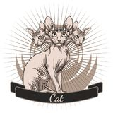 Cat of the Sphynx breed. Stock Photo