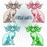 Cat of the Sphynx breed. Stock Photography