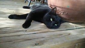 Cat Spirit nera Immagini Stock Libere da Diritti