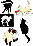 Cat spot illustrations Stock Photos
