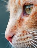 Cat in the Spotlight Stock Photo