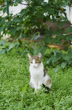 Cat. Spotted cat sitting on the lawn in the courtyard of the city in the background tree Royalty Free Stock Photo