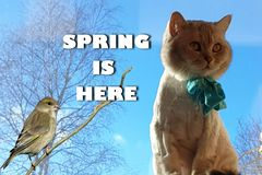 Cat On Spring Cute Funny British Cat white grey Cats Spring Cats royalty free stock photos