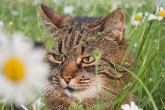 Cat in spring Stock Images