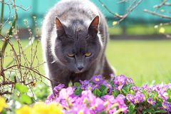 Cat and spring Royalty Free Stock Image
