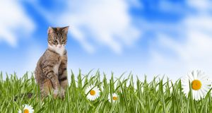 cat on a spring meadow Royalty Free Stock Image