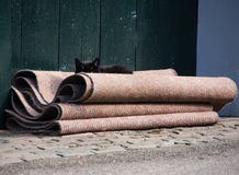 Cat spying at you Royalty Free Stock Photos