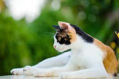 Cat squat relaxed on white marble table royalty free stock photography