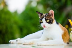 Cat squat relaxed on white marble table royalty free stock photo