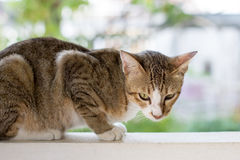 Cat squating on the wall Stock Photography