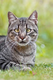 Cat with a squint. A portrait of a cat whith a squint in a garden Stock Photo