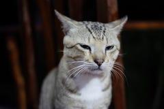 Cat Squinting bij de voorzijde stock afbeeldingen