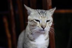Cat Squinting at the front stock images
