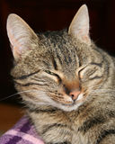 Cat squinting its eyes Stock Photography