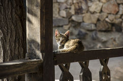 Cat in  St Khor Virap in Ararat valley in Armenia. The Khor Virap meaning deep pit or deep wellis an Armenian monastery located in the Ararat plain in Armenia Royalty Free Stock Image