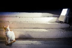 Cat on the stair Royalty Free Stock Photography