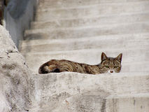 Cat on the staircase Stock Photos