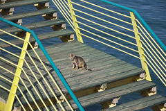 Cat on stairs Stock Photos
