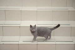 Cat on Stairs Royalty Free Stock Image