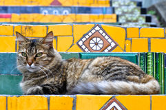 Cat on Stairs. Lazy cat on the stairs Escadaria Selaron in Rio de Janeiro Royalty Free Stock Image