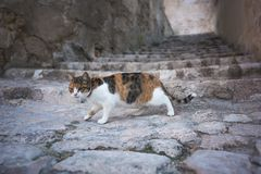 Cat and stairway royalty free stock photo