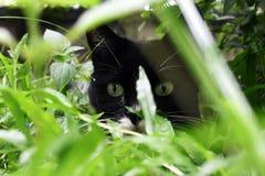 Cat Stalking royalty-vrije stock fotografie