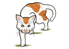 Cat Stalking Stock Photos