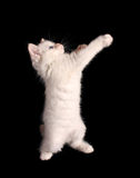 Cat stand on black Stock Photo