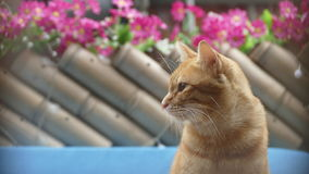 Cat stand on there with a nice background flower color Royalty Free Stock Photos