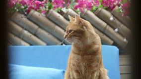 Cat stand on there with a nice background flower color Stock Photos