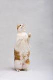 cat standing Στοκ φωτογραφία με δικαίωμα ελεύθερης χρήσης
