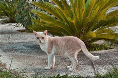 Cat. Standing alone ,in Greece stock photo